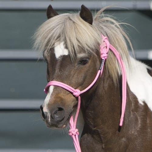 Pony Halter