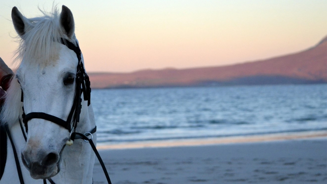 White horse on the beach at sunset