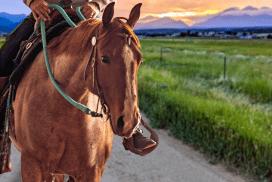 horse-report-june-19-pepper